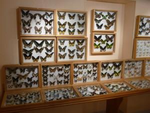 Une salle des papillons
