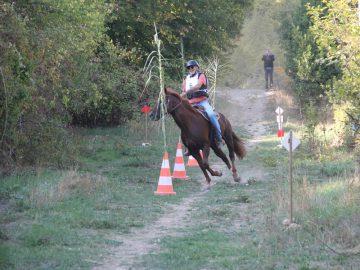 Concours Equitation©m Niel (1)